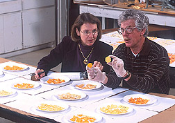 Photo: Geneticist Janice Bohac and technician John Fender compare chips made from USDA sweetpotato breeding lines. Link to photo information