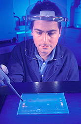 Photo: Examining an electrophoresis gel, zoologist Benjamin Rosenthal identifies fragments of genes isolated from related species of parasites. Link to photo information