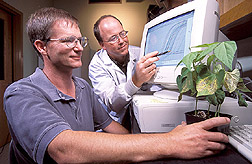 Phil Miklas  and George Vandemark view computer screen showing results of quantitative polymerase chain reaction assays. Link to photo information