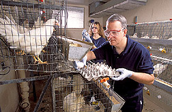 Immunologist and veterinarian collect and label eggs: Click here for full photo caption.
