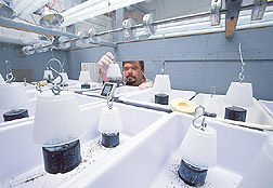 Entomologist examines a lifter cup in a phorid fly rearing system: Click here for full photo caption.