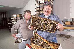 Technician and entomologist look for mite damage to bees: Click here for full photo caption.