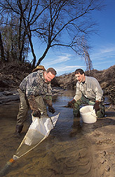 Two biologists collect macroinvertebrates in a Mississippi creek: Click here for full photo caption.