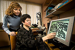 Physician and exercise physiologist examine a digital image of skeletal muscle: Click here for full photo caption.