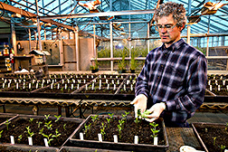 Technician transmits bean pod mottle virus to soybeans: Click here for full photo caption.
