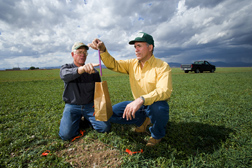 NRCS irrigation water management specialist and soil scientist assess biomass production of a cover crop: Click here for full photo caption.