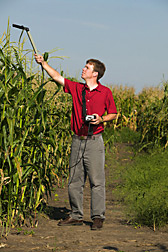 In test cornfield, Marty Williams measures solar radiation intercepted by the plants. Link to photo information