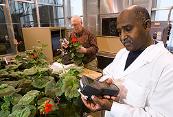 Using a nondestructive infrared temperature sensor, plant pathologist (left) takes leaf temperature measurements to predict plant root health, while another plant pathologist measures chlorophyll fluorescence: Click here for full photo caption.