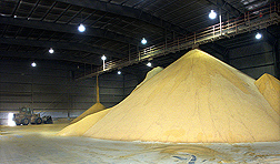 A large pile consisting of tons of distiller's dried grains being held in storage at an ethanol plant. Link to photo information