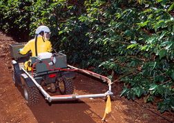 Technician uses an all-terrain vehicle to apply a band of protein bait spray (containing spinosad) in a Hawaii coffee field: Click here for full photo caption.
