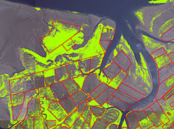Color infrared aerial photograph of a portion of Willapa Bay (in Washington State) showing vegetation layer (green) areas: Click here for full photo caption.