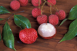 Lychee, Litchi chinensis, was first introduced into Hawaii 100 years ago, but has been cultivated in China for nearly 4,000 years: Click here for full photo caption.