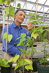 Plant pathologist examines a bean cultivar that is a new source of genes for resistance to a hyper-virulent pathogen that causes rust disease of dry and snap beans: Click here for full photo caption.