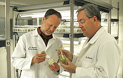 Geneticist (left) and ecologist inspect two green algae cultures for an ongoing study of the effects of fertilizers on algal growth: Click here for full photo caption.