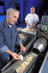 Pilot plant operator (right) and food technologist prepare slices of potatoes for frying and evaluation: Click here for full photo caption.