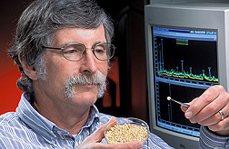 Physiologist inspects microtubers for signs of sprouting before hormone analysis by mass spectrometry: Click here for full photo caption.