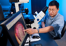 Photo: Investigators Jin-Ran Chen views a rat bone with a fluorescent micrograph projected on a computer screen. Link to photo information