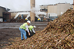 Photo: ARS chemist Gillian Eggleston (left) inspects a storage pile of sugar cane. Link to photo information