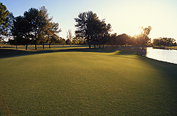After establishment, a new putting green usually starts off having a uniform appearance if it's free of weeds. But mutations in a bermudagrass green, in time, can cause off-types of bermudagrass to appear: Click here for full photo caption.