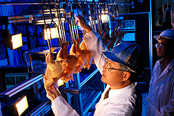 Developed by ARS agricultural engineer Yud-Ren Chen, this automated system could help speed inspection of the billions of U.S. chickens processed annually: Click here for photo caption.