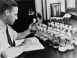 In his Peoria laboratory, USDA scientist Andrew Moyer discovered the process for mass producing penicillin: Click here for photo caption.