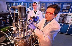Molecular biologist Z. Lewis Liu (right) and technician Scott Weber add a new yeast strain to a corn cob mix to test the yeast's effectiveness in fermenting ethanol from plant sugars: Click here for full photo caption.