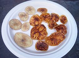 Zebra chip symptoms in potato slices from infected tubers in uncooked (left) and fried chips (right): Click here for full photo caption.