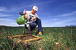 Soil scientist Bill Edwards brings worms to the soil surface so they can be counted. Click here for full photo caption.
