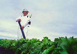 Technician Joel Garza applies a whitefly-killing fungus to vegetable crops. Click here for full photo caption.