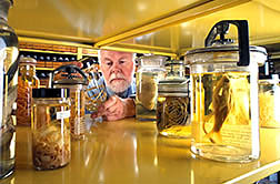 The curator of the U.S. National Parasite Collection retrieves a specimen. Click here for full photo caption.