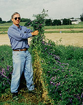 Plant Physiologist John Teasdale displays a prized mulch crop of hairy vetch. Click here for full photo caption.