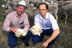 Animal scientists Michael Brown (left) and Art Goetsch compare wool from Gulf Coast Native sheep with hair (in Art's hand) from St. Croix sheep.