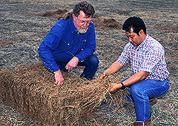 Technician (left) and agricultural forester examine a bale of pine needles.