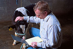 Veterinarian Marcus Kehrli records data on a dairy calf that has a genetic disorder.