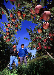 Scientist and orchard manager in IPM area