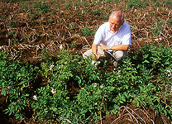 John Helgeson examines potato plants