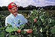Thomas Devine has bred three new giant soybean cultivars.