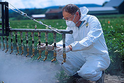 Photo: In tests to control caterpillars on vegetable crops, ecologist Stephen Wraight examines nozzles used to spray spores of the insect pathogenic fungus Beauveria bassiana. Link to photo information