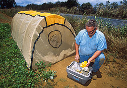 Areawide site coordinator services bait traps: Click here for full photo caption.