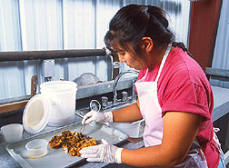 Student intern examines papaya for larvae: Click here for full photo caption.