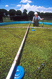 Entomologist collects water samples from a tank: Click here for full photo caption.