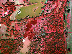 Color-infrared image of giant salvinia: Link to photo information