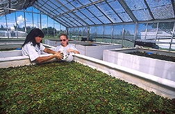 Technician and Student Conservation Association member collect giant salvinia: Click here for full photo caption.