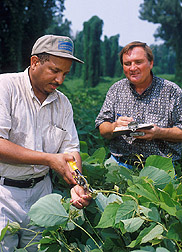 Technician and plant pathologist examine kudzu sample: Click here for full photo caption.