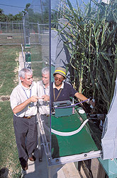 Soil scientist and plant physiologist collect soil respiration measurements: Click here for full photo caption.