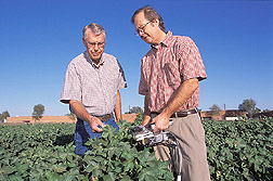 Technician and plant physiologist measure photosynthesis in cotton field: Click here for full photo caption.