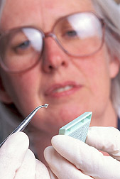 Microbiologist prepares a tissue sample: Click here for full photo caption.
