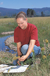 Technician collects plant specimens: Click here for full photo caption.