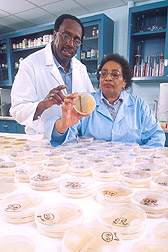 Two scientists work with a bacteria that may help prevent Fusarium fungi from infecting corn: Click here for full photo caption.