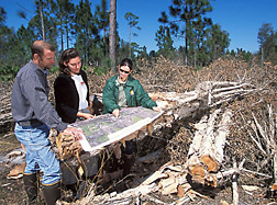 Two entomologists discuss melaleuca treatments with Lee County land manager: Click here for full photo caption.